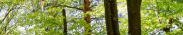 Alptrees: Vabilo na posvet Drevesa govorijo